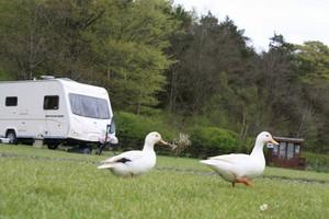 Adult Only Caravan Park