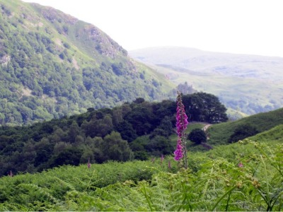 grasmere walks