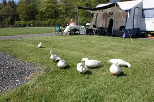 tranquil caravan park for adults near Carlisle